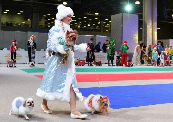 სნეგუროჩკა კოსტიუმების კონკურსზე ძაღლებს ასეირნებს - Sputnik საქართველო
