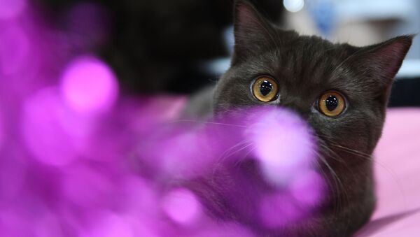 კატა - Sputnik საქართველო