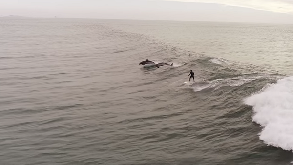 Необычный серфинг мужчины в компании дельфинов попал на видео - Sputnik Грузия