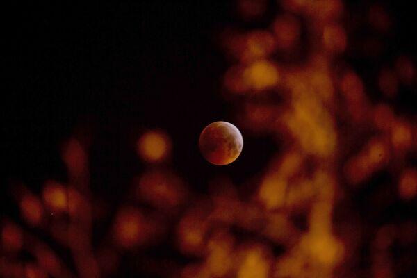 Кровавоя луна между ветвями деревьев в Антверпене, Бельгия - Sputnik Грузия