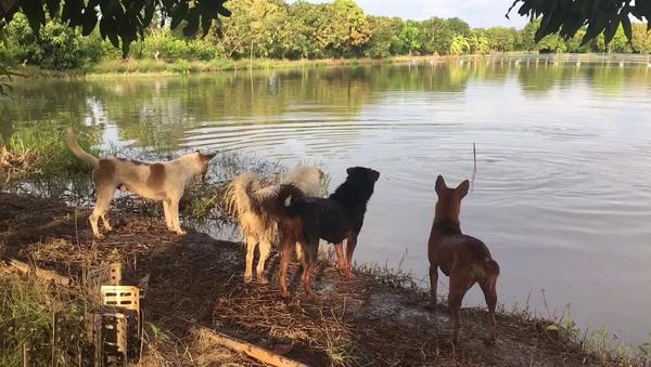 Парень решил разыграть своих четвероногих друзей, и у него получилось – видео - Sputnik Грузия