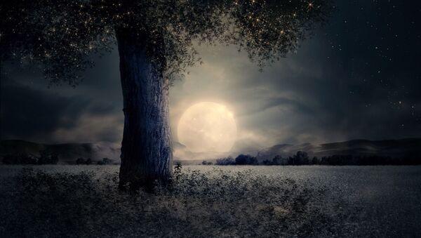 მოციმციმე ხე მთვარის ფონზე - Sputnik საქართველო