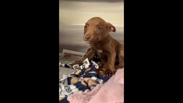Собака заулыбалась, когда поняла, что ее забирают из приюта – умилительное видео - Sputnik Грузия