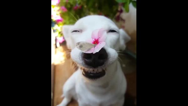 Милая собачка поздравляет всех женщин с 8 марта – видео - Sputnik Грузия