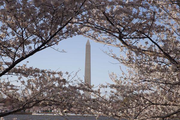 Цветки вишни появляются раньше, чем листья. Именно вид цветов, оживляющих голую ветку, ассоциируется с процессом возрождения - Sputnik Грузия
