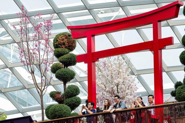 Посетители в природном парке Гарденс бай Бэй в Сингапуре наслаждаются цветущей сакурой - Sputnik Грузия