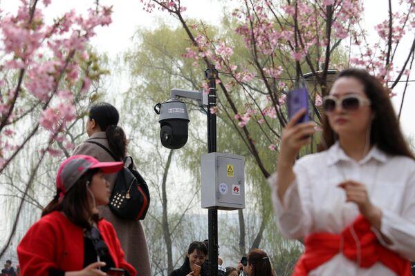 Ханами - это древняя японская традиция любования цветами сакуры - Sputnik Грузия