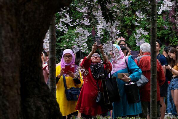 В период цветения сакура преображает страны, в которых прорастает.  Она обволакивает упоительным ароматом. Это прекрасное и захватывающее по своей красоте зрелище - Sputnik Грузия