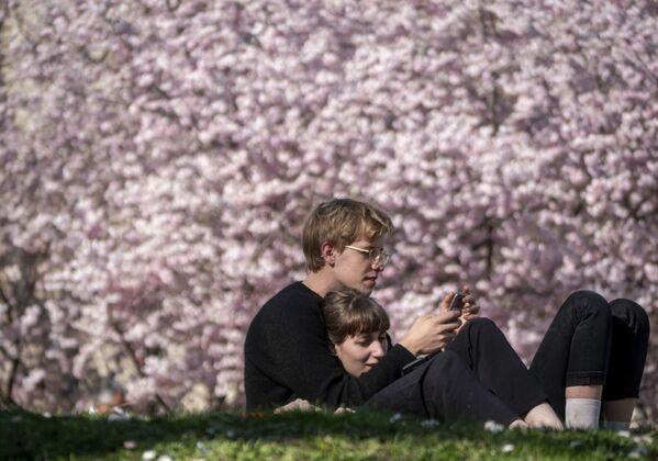 За цветением вишни наблюдают не только в Японии, но и по всему миру - Sputnik Грузия