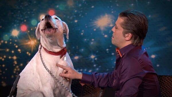 ძაღლმა ნიჭიერთა შოუზე უიტნი ჰიუსტონის სიმღერა შეასრულა - სახალისო ვიდეო - Sputnik საქართველო