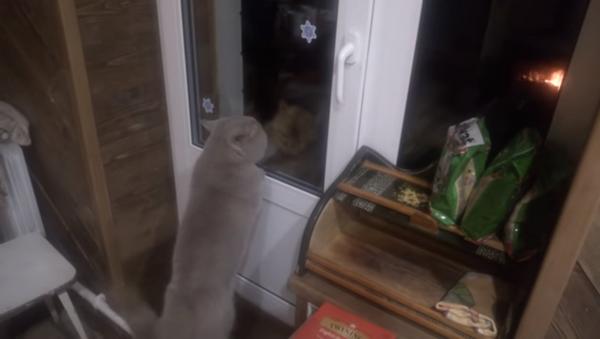 მოლაპარაკე კატა პატრონს კარის გაღებას და სხვა კატასთან საჩხუბრად გაშვებას თხოვს - ვიდეო - Sputnik საქართველო