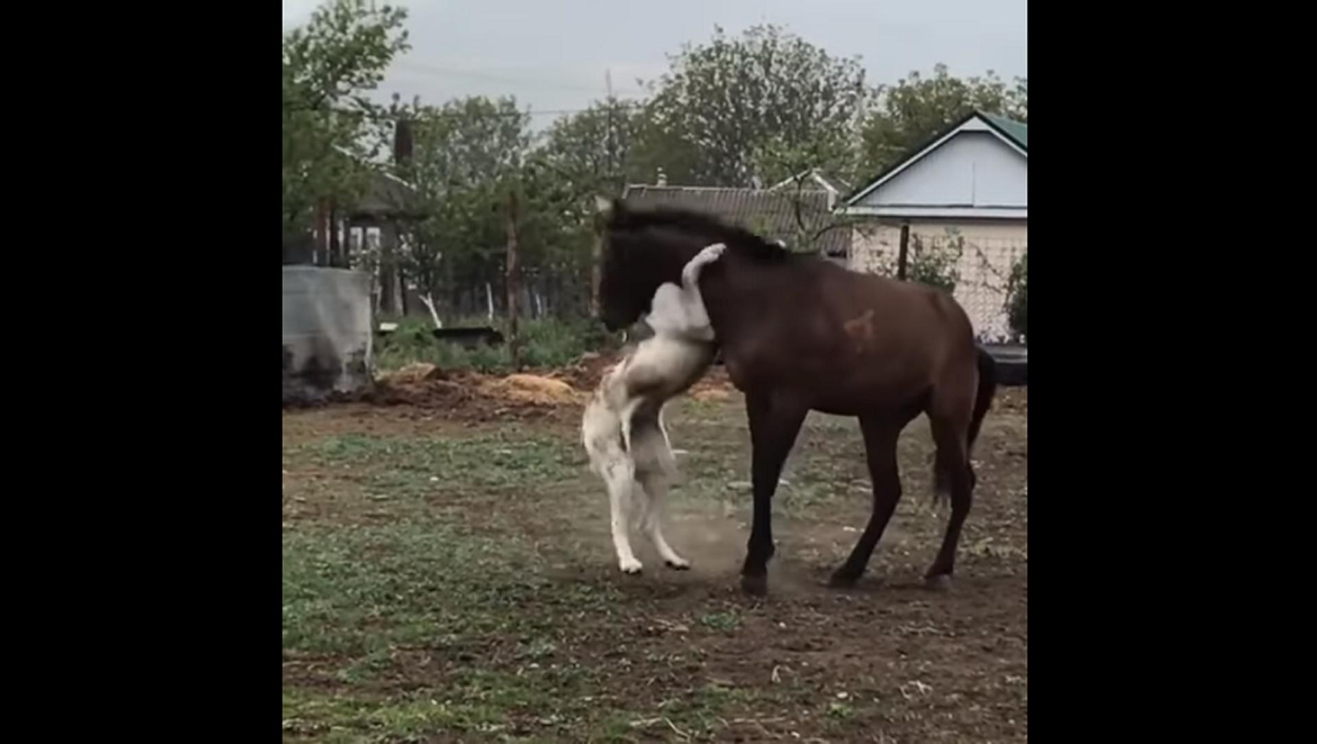 Собака и лошадь показали, что значит настоящая дружба и доверие – позитивное видео - Sputnik Грузия, 1920, 22.06.2021