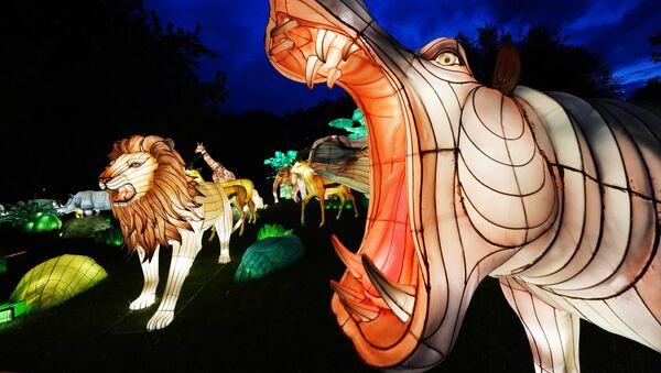 Экспозиция, представленная на фестивале гигантских китайских фонарей на острове Канта в Калининграде - Sputnik Грузия