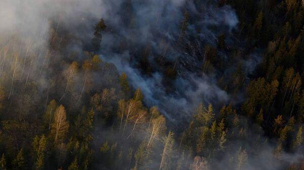 Пожар в Боржомском лесу - Sputnik Грузия