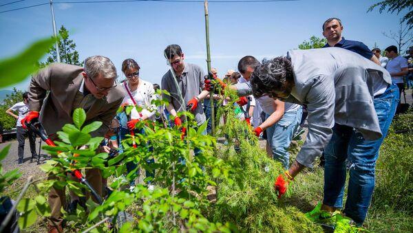 თბილისის მერიის გარემოს დაცვის საქალაქო სამსახურმა, კუს ტბის მიმდებარე ფერდობზე გამწვანების მასშტაბური ღონისძიება გამართა - Sputnik საქართველო