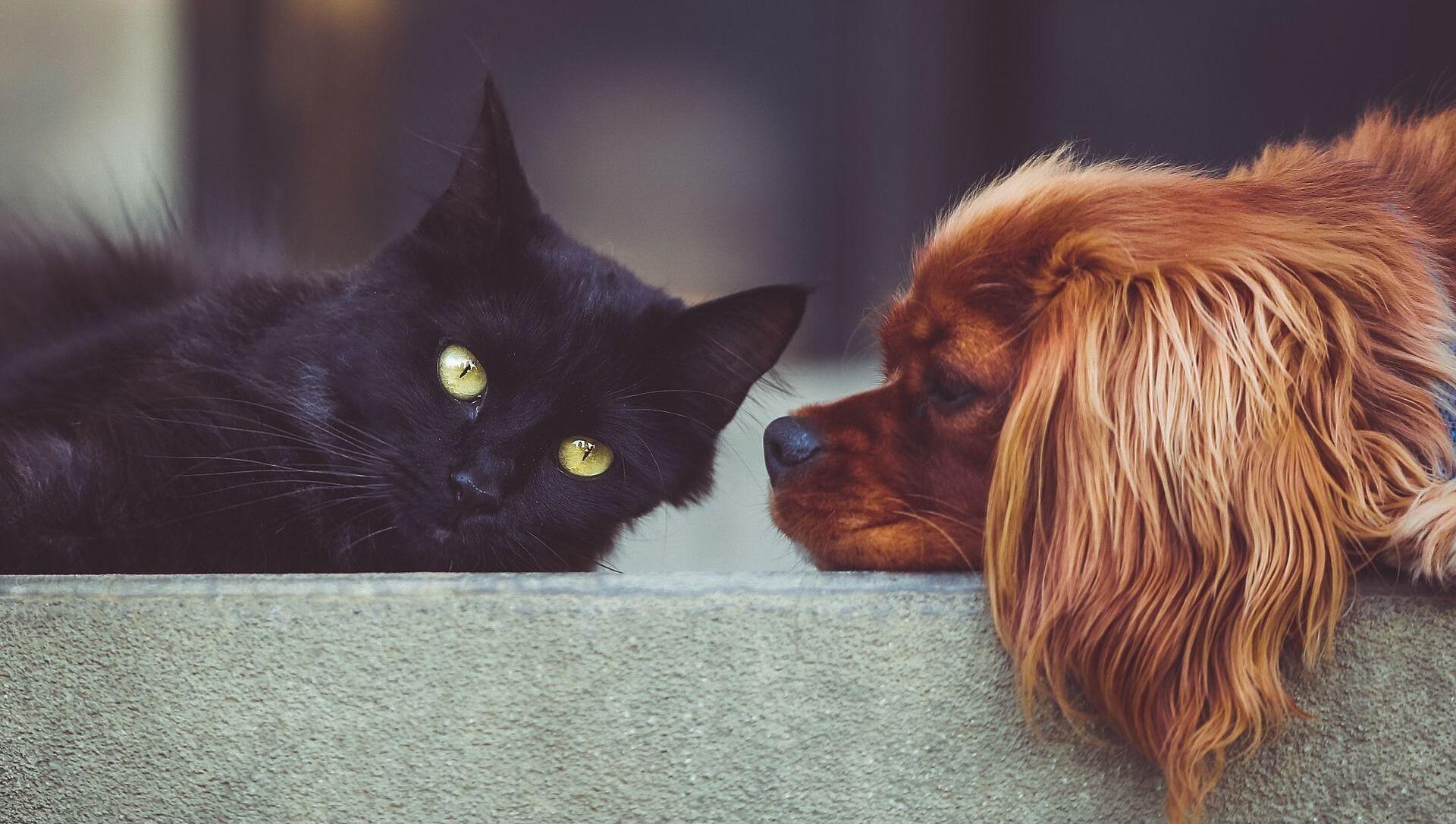 Кошка и собака - Sputnik Грузия, 1920, 18.02.2021
