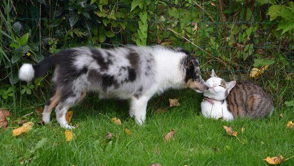 კატა და ძაღლი - Sputnik საქართველო