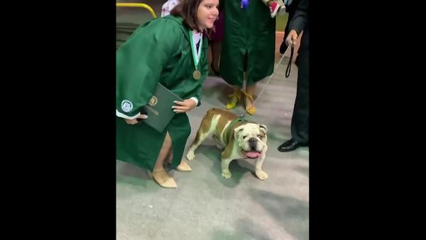 Выпускница решила сделать фото с собакой и дипломом, но что-то пошло не так – видео - Sputnik Грузия
