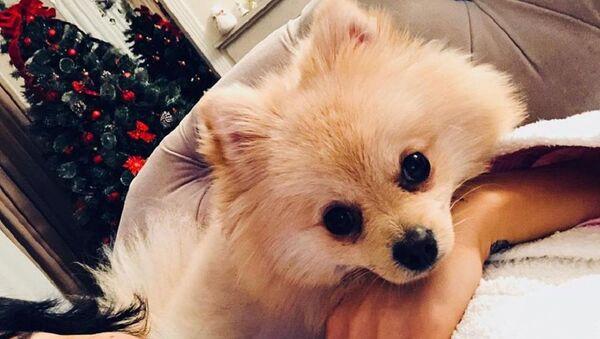 შორენა ბეგაშვილის ძაღლი - Sputnik საქართველო