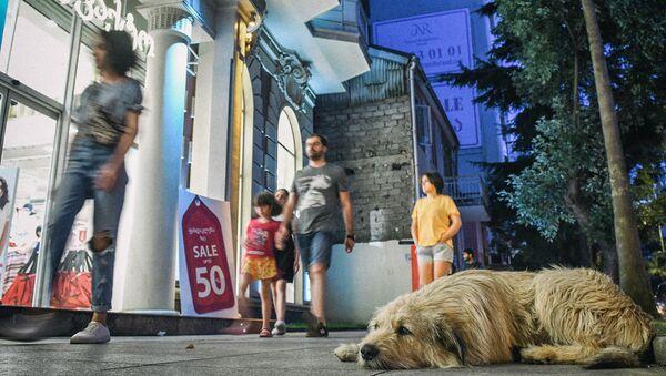 Неповторимая Аджария - виды. Собака и прохожие на одной из улиц в центре Батуми - Sputnik Грузия