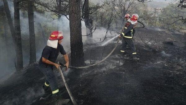 Тушение лесных пожаров в Гори - Sputnik Грузия