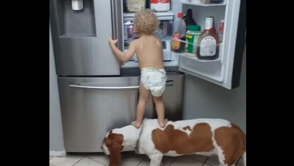 ბავშვები და ძაღლები - Sputnik საქართველო