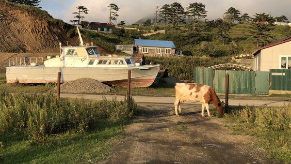На маленьком Шикотане море и океан видны с любой точки. Но даже обычные пейзажи деревенской жизни не обходятся без морской тематики. - Sputnik Грузия