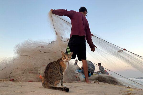 კატა და პალესტინელი მეთევზე ღაზას სექტორის ჩრდილოეთ ნაწილის სანაპიროზე - Sputnik საქართველო