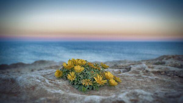 ყვავილები ზღვის სანაპიროზე - Sputnik საქართველო