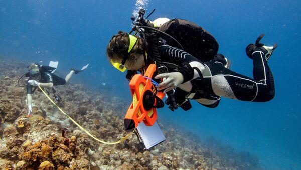 Погружение с целью осмотра поврежденных кораллов на Виргинских островах - Sputnik Грузия