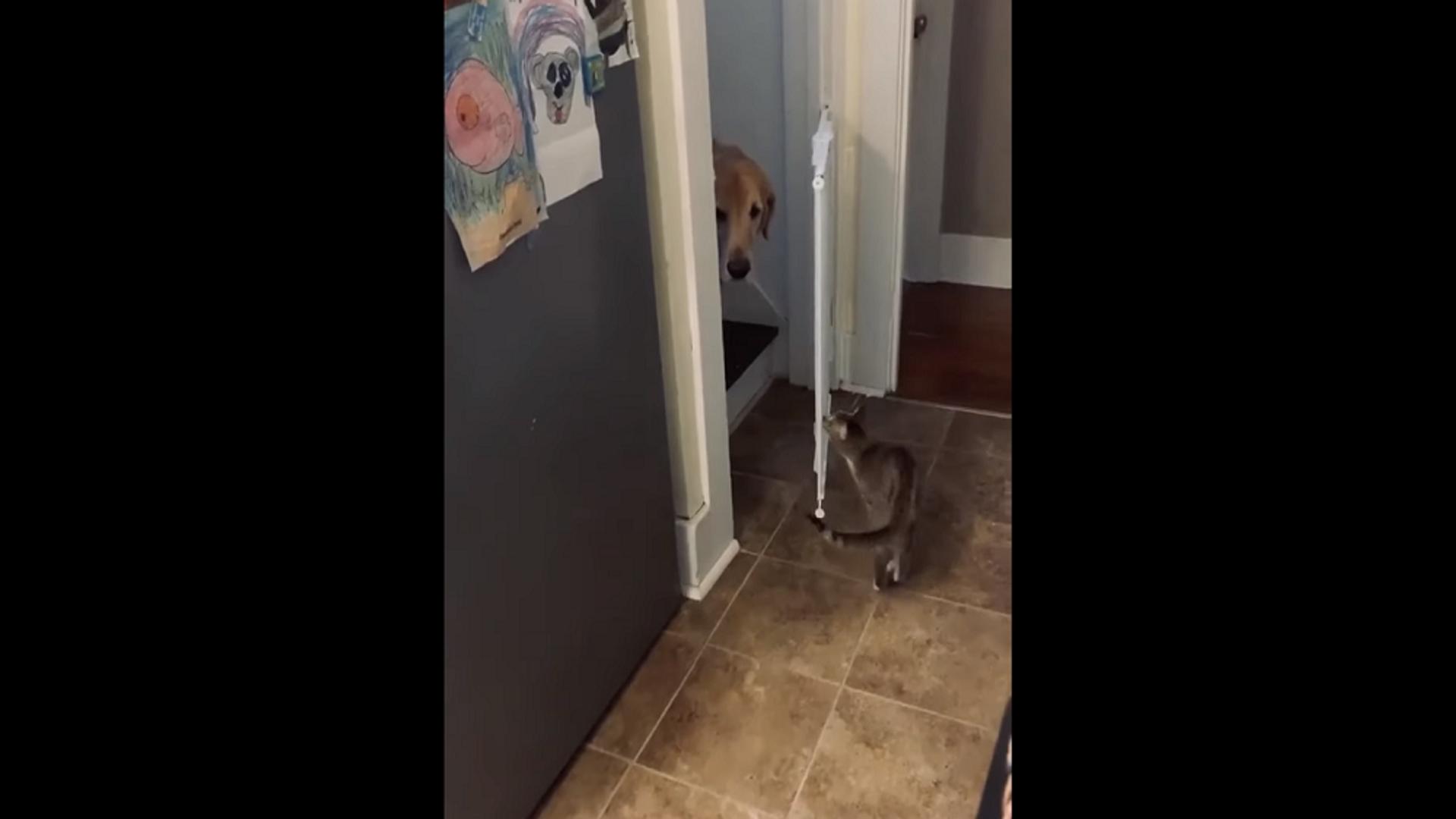 Настоящий джентльмен: кот покорил Сеть своей заботой о собаке – видео - Sputnik Грузия, 1920, 13.10.2021