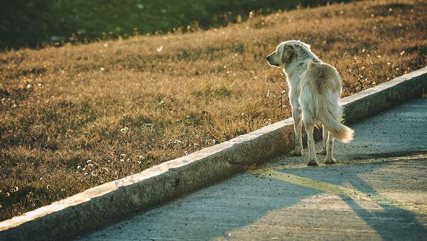 Собака смотрит на человека. Бродячие псы - Sputnik Грузия