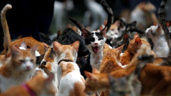 Кошка во время обеда в кошачьем приюте в Индонезии  - Sputnik Грузия