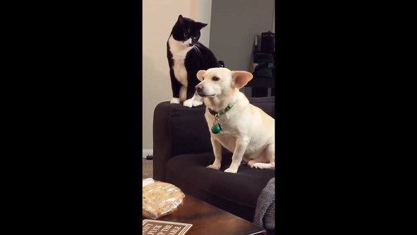 Бить или не бить: очень долго думавшая над пакостью кошка рассмешила Сеть – видео - Sputnik Грузия