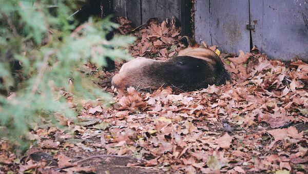 Бродячая собака спит в городском парке - Sputnik Грузия