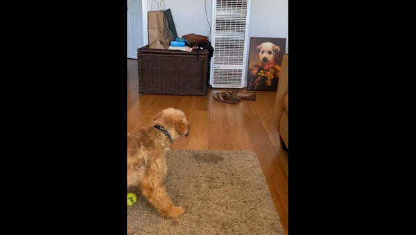 Женщине подарили портрет ее собаки, реакция питомца бесценна – видео - Sputnik Грузия