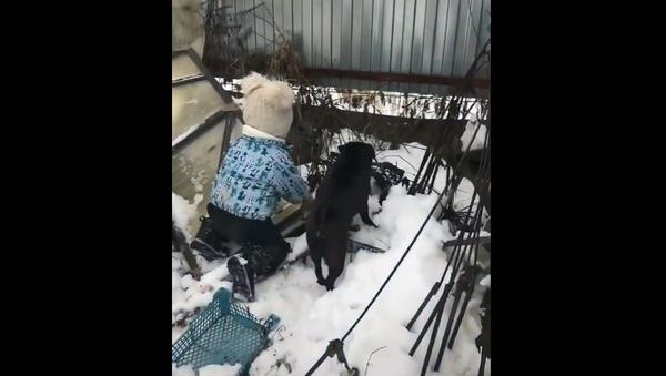 За друга горой: малышка помогла собаке облаять соседского пса – смешное видео - Sputnik Грузия