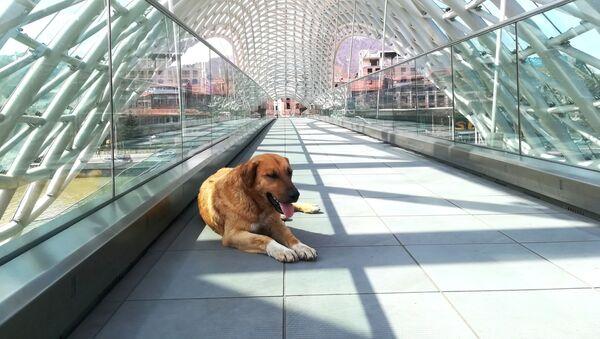 Одинокий пес на мосту Мира рядом с парком Рике - Sputnik Грузия