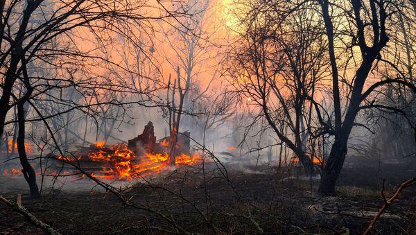 Лесной пожар в Чернобыльской зоне  - Sputnik Грузия