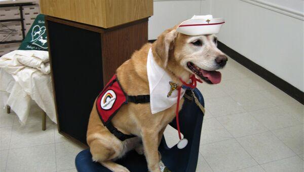თერაპევტი ძაღლი - Sputnik საქართველო