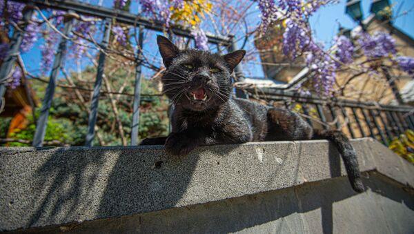 Карантинная весна в столице Грузии. Кошка нежится на солнышке - Sputnik Грузия
