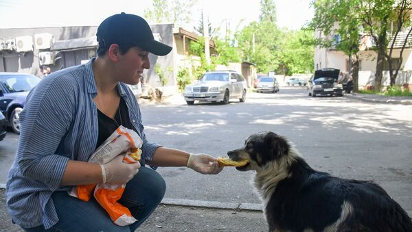Мариам Ростиашвили кормит бездомных собак - Sputnik Грузия