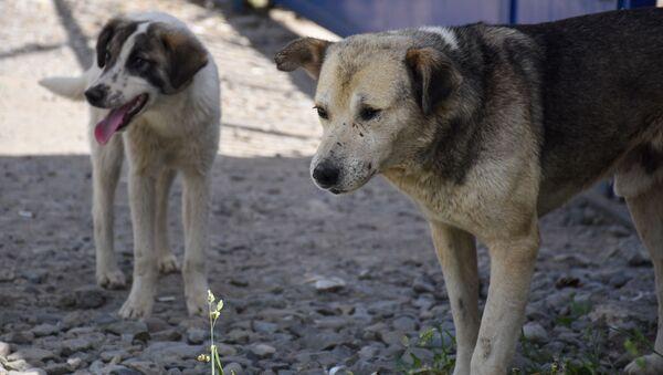 Бездомные собаки - Sputnik Грузия