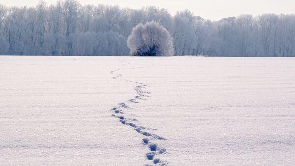 ნაკვალევი თოვლში - Sputnik საქართველო