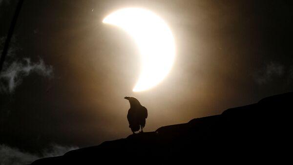 Ворона во время частичного солнечного затмения в Кении  - Sputnik Грузия