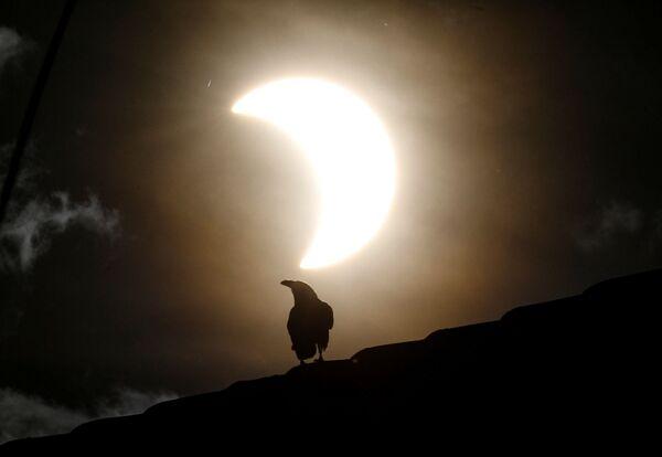 Солнечные затмения происходят только тогда, когда Луна находится между Землей и Солнцем - Sputnik Грузия