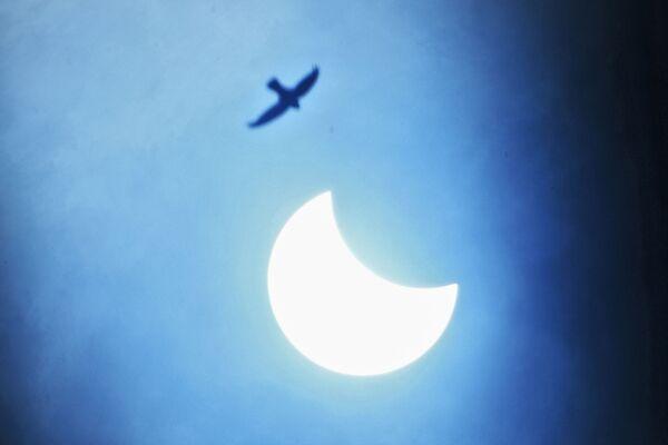 Птица в небе во время частичного солнечного затмения в Индии  - Sputnik Грузия
